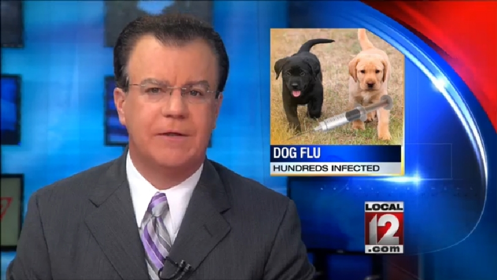 Canine flu outbreak sickens hundreds of dogs in Midwest | WKRC