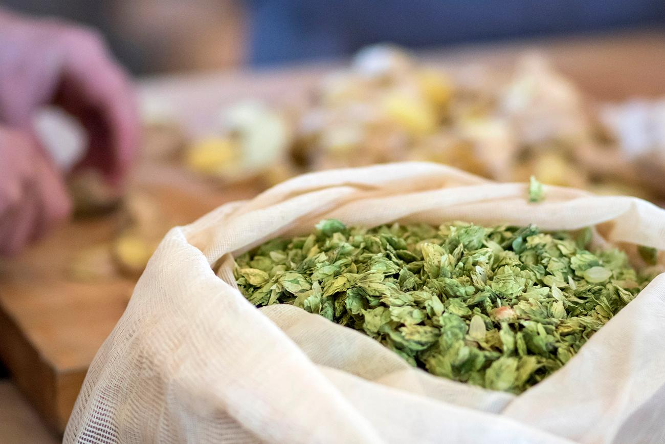 These Ohio-grown hops will be boiled along with other ingredients to add flavor to beers. / Image: Allison McAdams