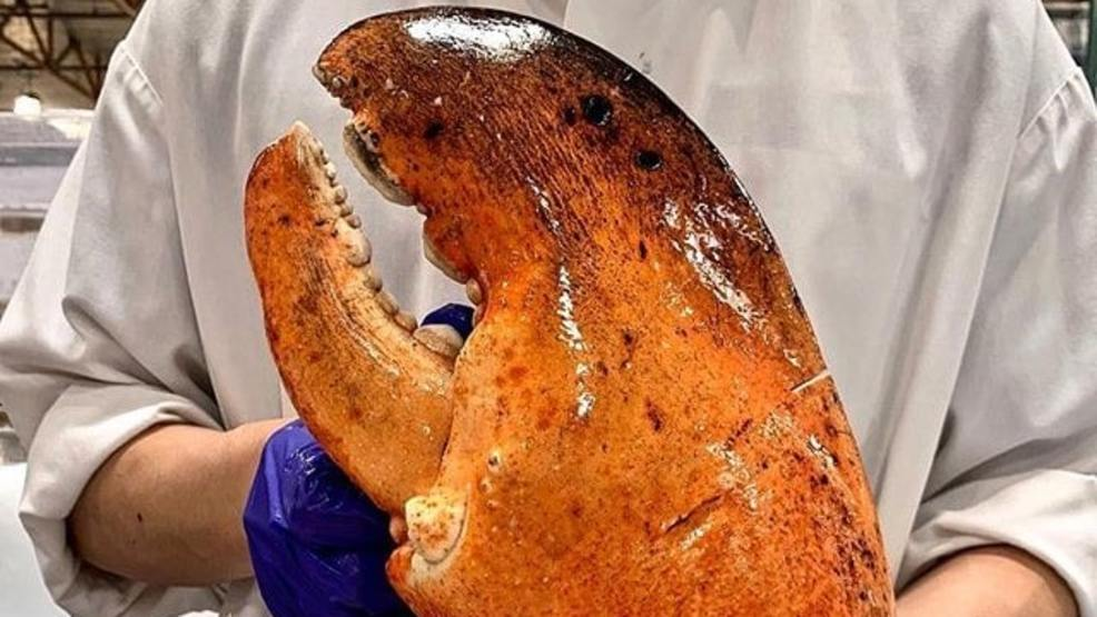 Did You See Costcos Massive 3-Pound Lobster Claws