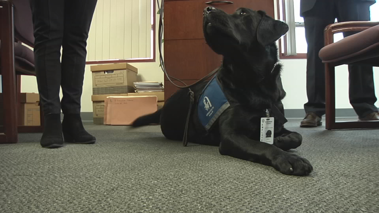 The two-and-a-half-year-old black lab was trained by Support Dogs Inc. and enjoys playing fetch and eating ice cubes. (WICS)