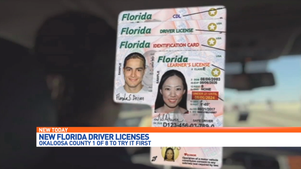 Florida Department Of Motor Vehicles Drivers License Check