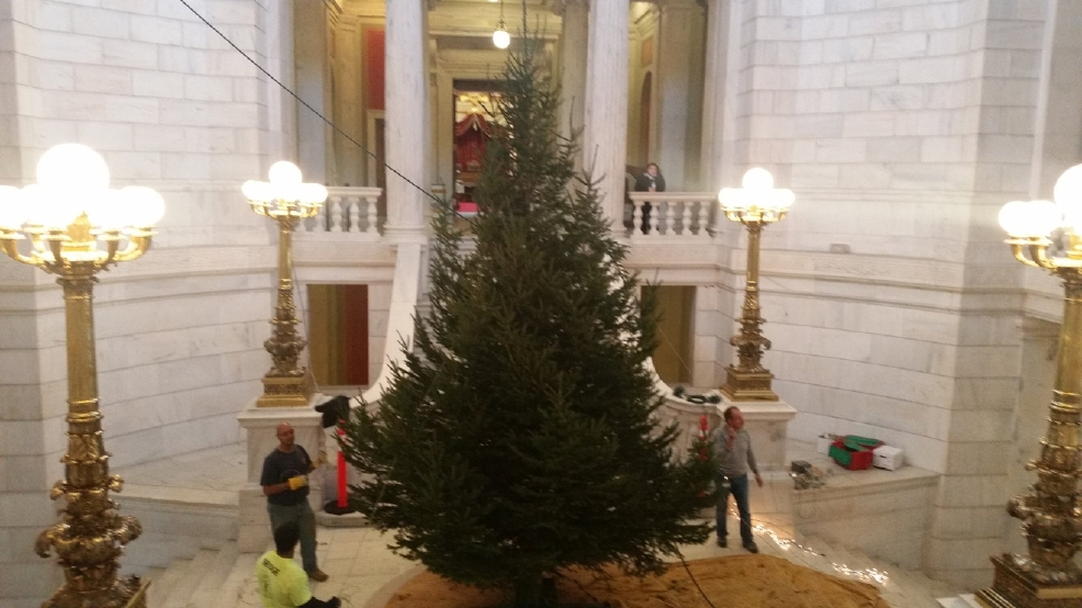 Bigger Christmas Tree Takes Its Place In State House