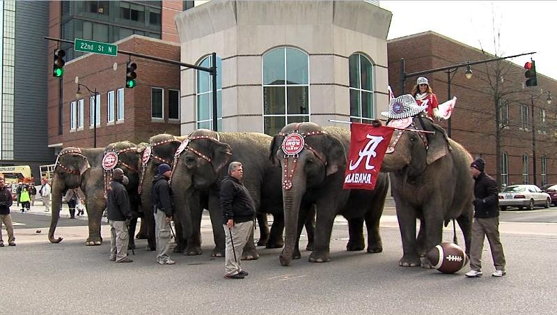 Circus elephants pose for the cameras outside the Southeastern Conference office in downtown Birmingham on Wednesday.