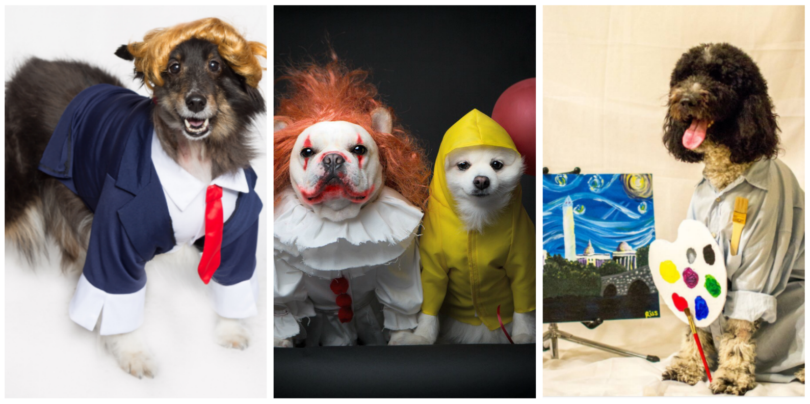 Weekday Halloweens are ruff... we're all nursing a sugar hangover today! But just in case you need a little extra oomph to get through #humpday, here are 35 pets who totally ROCKED Halloween this year! (Images: IG users @dcdogmoms, @sebastianlovesluna and @teddy4president)<p></p>