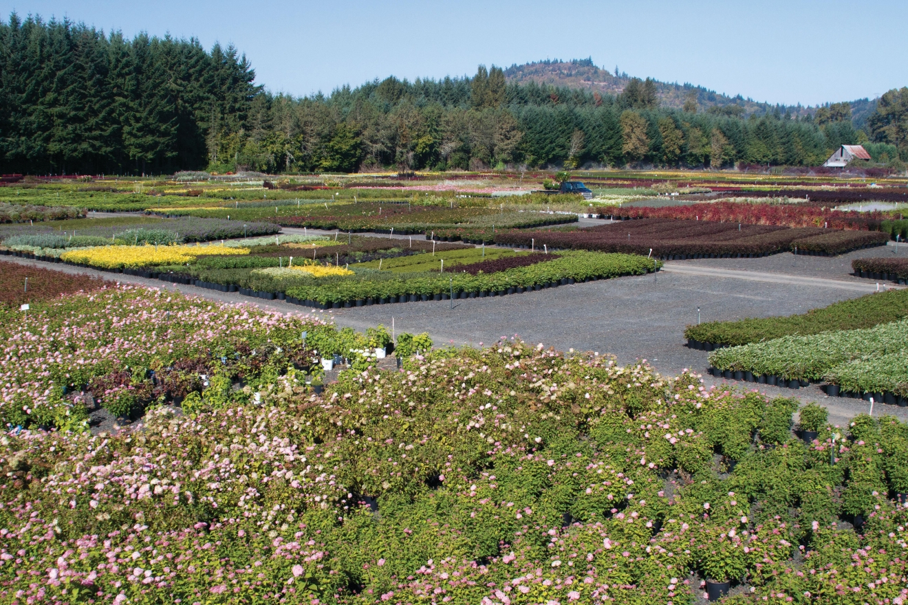 Van Essen Nursery in Lebanon, Oregon grows flowers as well as tress.
