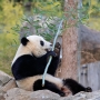 Bao Bao arrives in China after 16 hour flight from Dulles