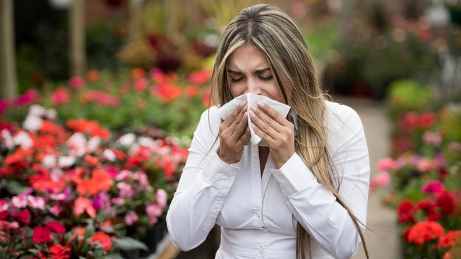 HealthWACH - The 4 Kinds of Sinusitis and The Best Treatment Options