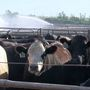 Workshop available about Livestock Disaster Programs