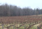 wineries wsbt 3.PNG