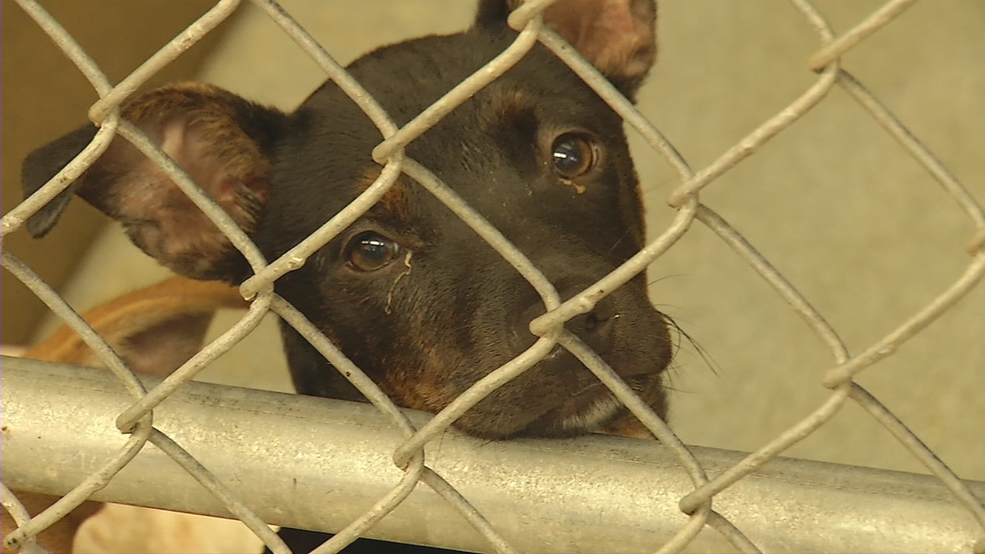Abilene Animal Shelter busy with lost pets after Independence Day | KTXS
