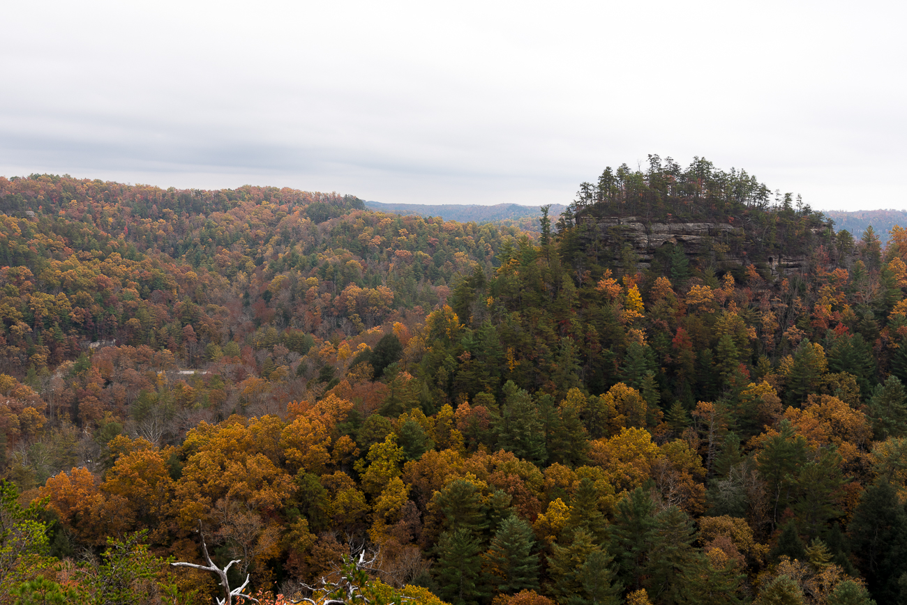Nearby hiking trails offer stunning views of Red River Gorge. / Image: Phil Armstrong, Cincinnati Refined // Published: 11.14.17<p></p>