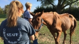 Humane Society: Emaciated horses, mules rescued from heartland property