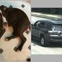 Dog found, SUV stolen from family's home in Northeast Washington