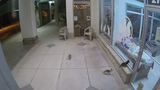 Three kittens abandoned at Colony Cats overnight, caught on surveillance camera