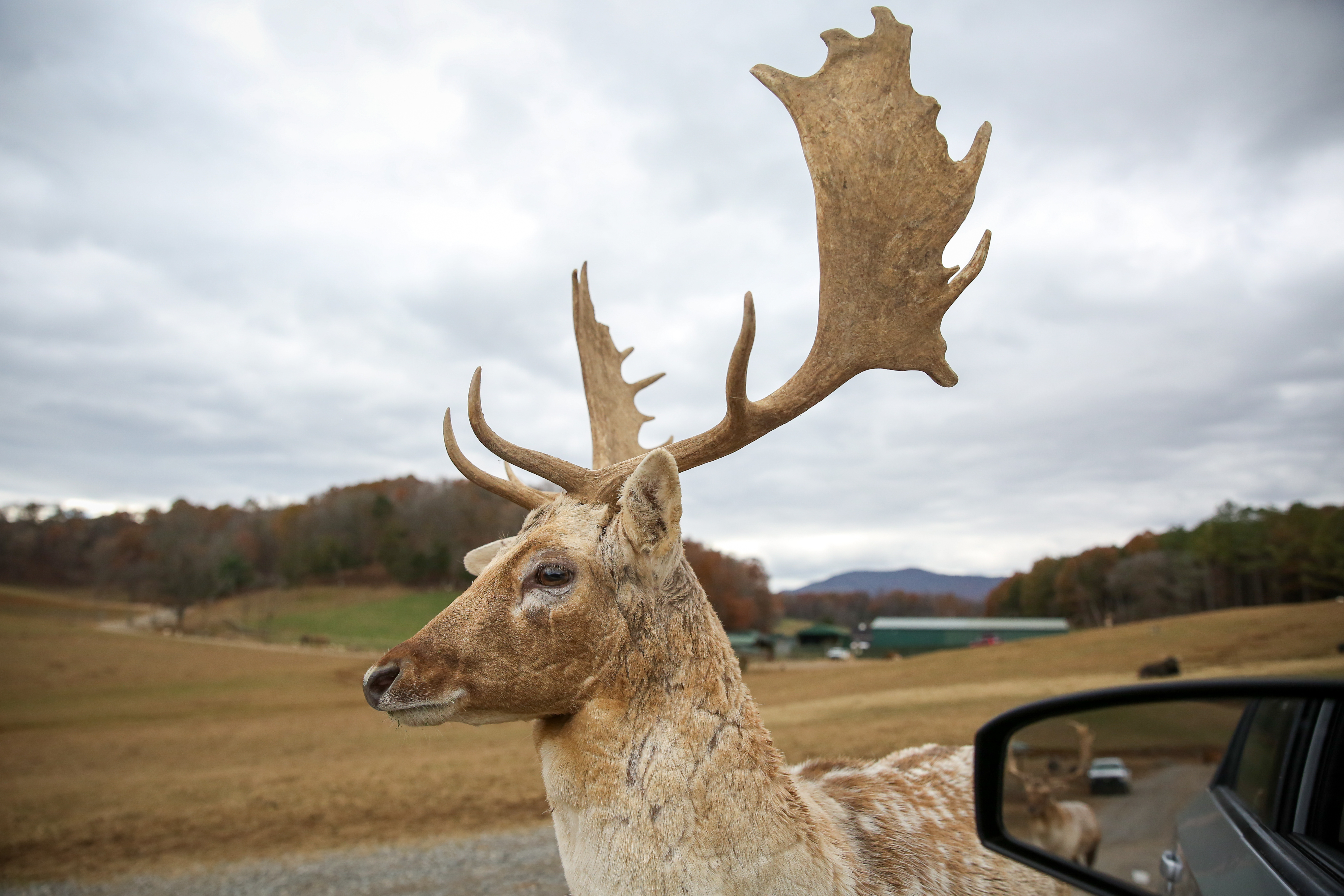 About 200 miles southwest of D.C., elk, ostriches, llamas, bison, deer  and exotic animas roam the mountains at Virginia Safari Park. Visitors can pay to drive slowly over three miles of road to feed and interact with these animals, offering the opportunity to get up close and personal. The park closes for the winter on November 26, so now is a great time to experience this unique attraction. For adults, admission is $20, but you'll definitely want to splurge on a bottle of feed. (Amanda Andrade-Rhoades/DC Refined)