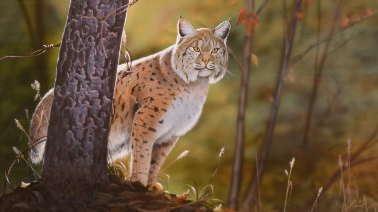 This beautiful bob cat graces the month of September, by Randy Muir. (WCHS/WVAH)