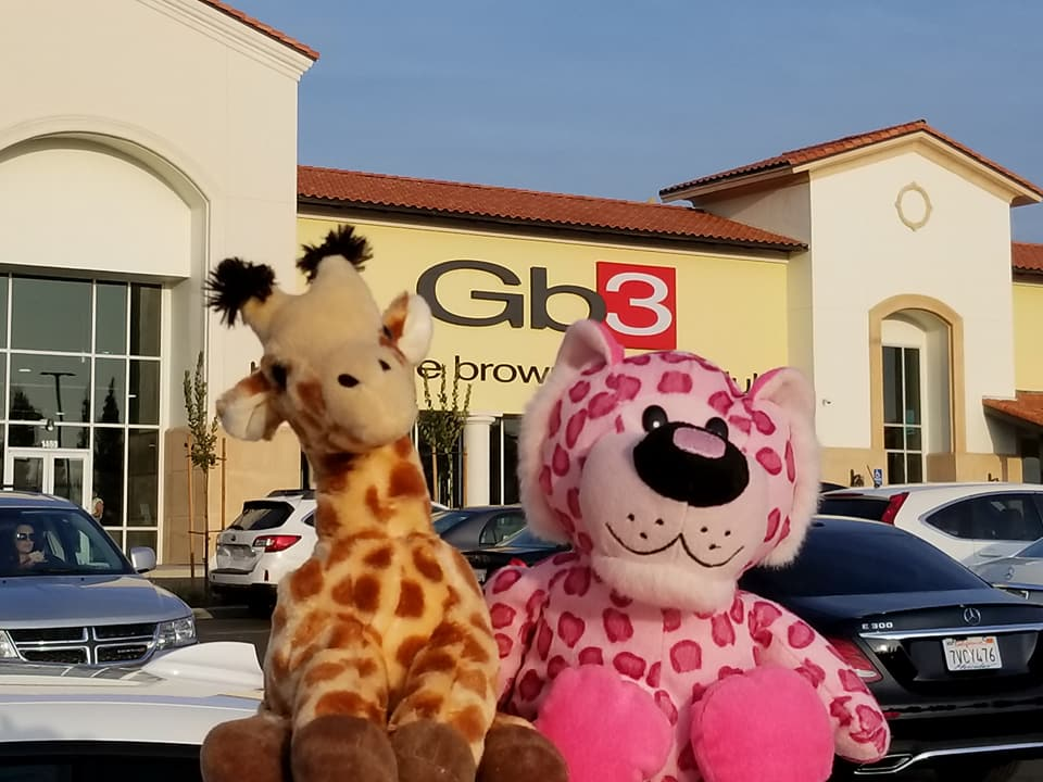 Clovis woman on a mission to reunite stuffed animals with their 'best friend.' Going to the gym. (Brenda Bibb Kirby via KMPH)<p></p>