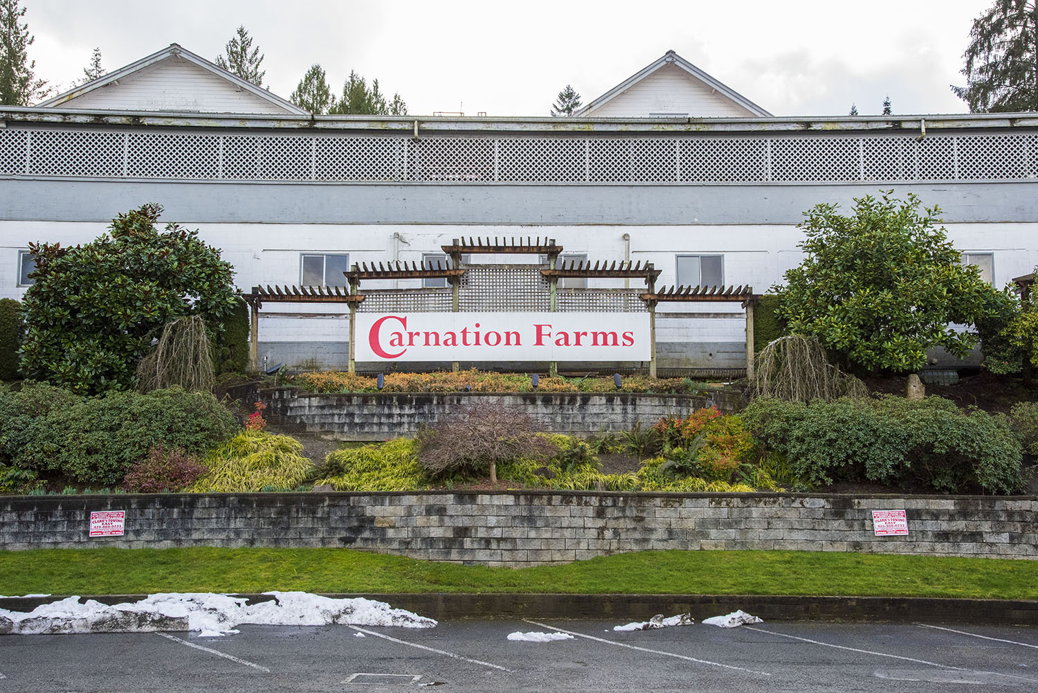 Looking to grow dairy production at Carnation Farms, E.A. set out to increase his herd numbers by creating a super selective breeding program of Holstein cattle. Biology aside, he also outlined one main goal for working with cattle: ensure each cow is happy. (Rachael Jones / Seattle Refined)