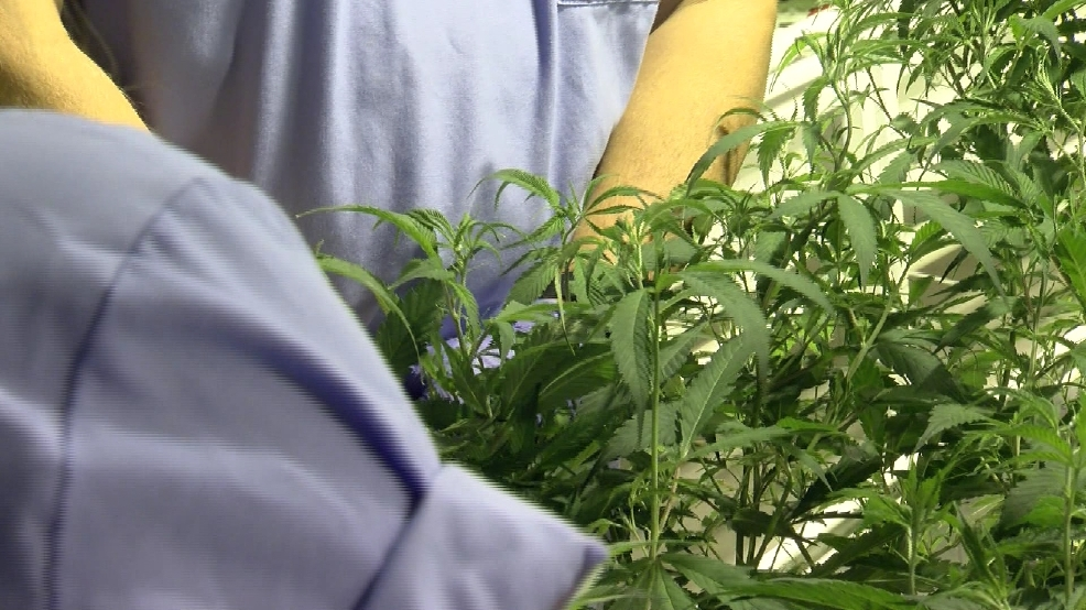 Company looking into home delivery of medical marijuana