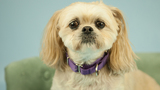 Photos: 7 adoptable pets from Woodinville Homeward Pet