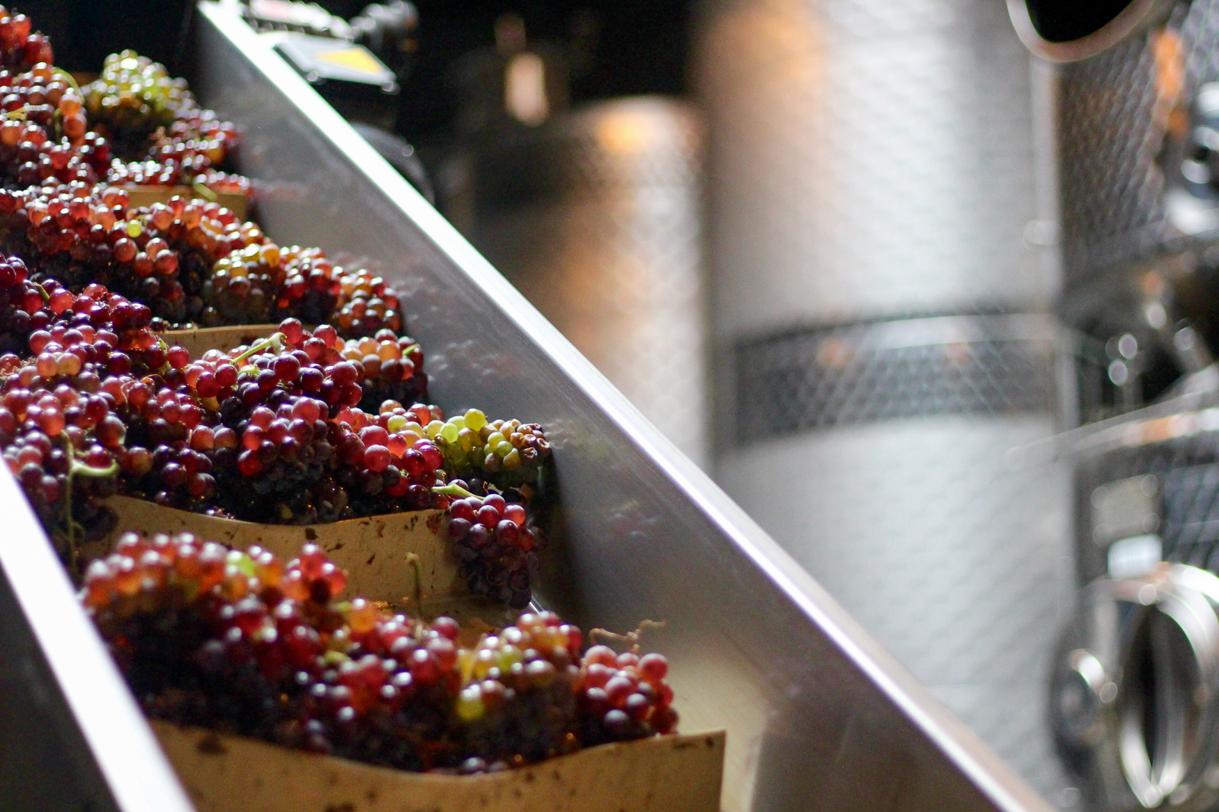 Grapes being sent to the destemmer. (Image courtesy of District Winery)
