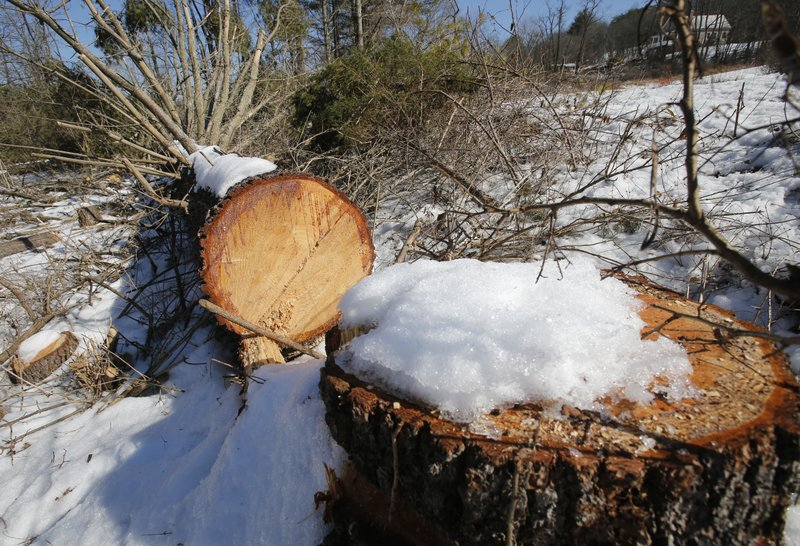 <p>Downed trees mark the route of the Atlantic Coast Pipeline in Deerfield, Va., Thursday, Feb. 8, 2018. Work is progressing on clearing a path for the pipeline. (AP Photo/Steve Helber)</p>