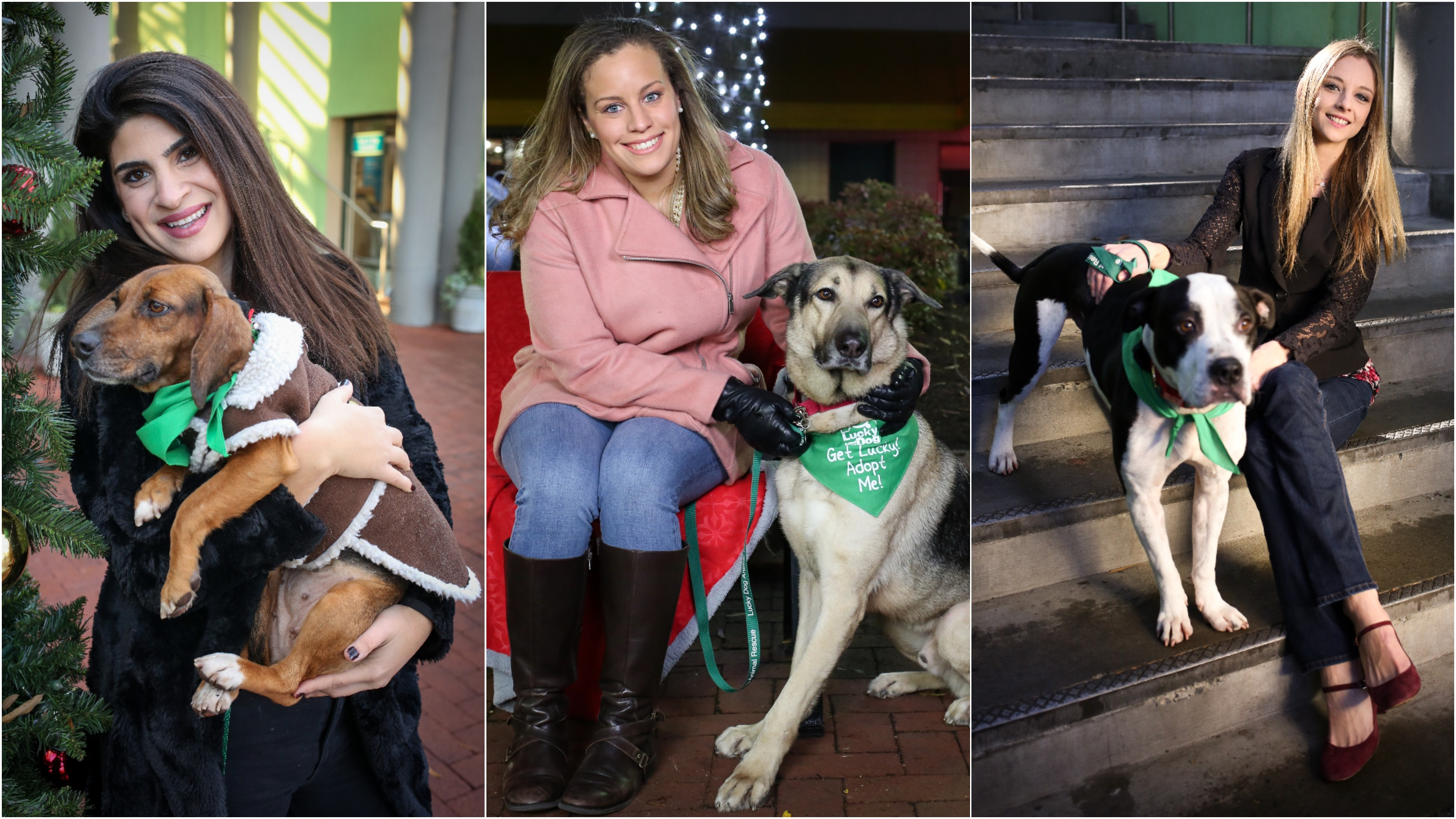 All the ladies in this photo gallery are single and all the pups featured are available for adoption through Lucky Dog Animal Rescue. Lets get some single ladies dates and homeless dogs forever homes! (Amanda Andrade-Rhoades/DC Refined)<p></p>