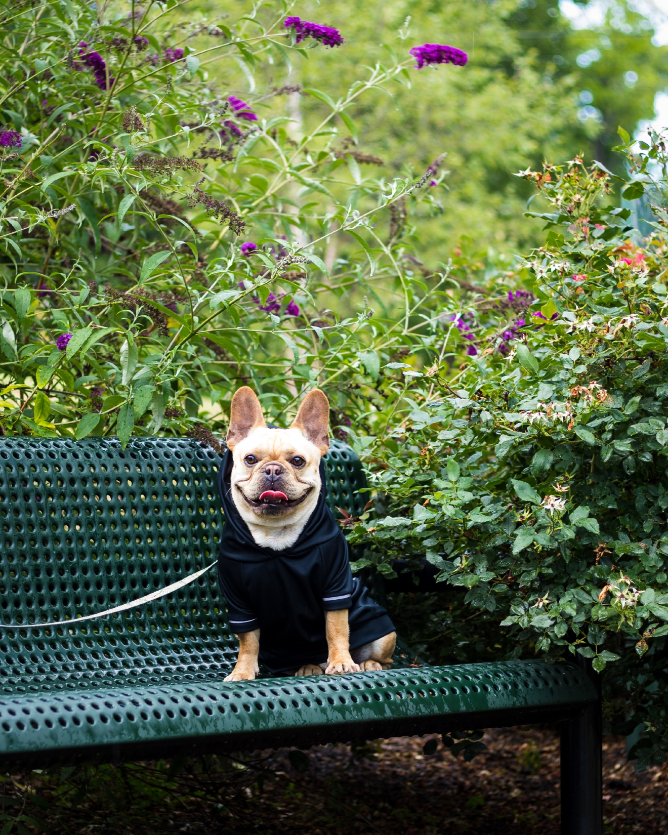 Meet Monsieur Mini Cooper (because he's stocky and compact like the car), an almost two-year-old French Bulldog whose furiends call him Coop. Cooper is part of a Frenchie meetup group that has hosted a minion party at Barrel Oak Winery, a Christmas photo shoot with 50 Frenchies in costumes and Cooper hosted his own first barkday party last March! He loves Fridays, lazy Sunday snuggles, filet mignon (medium rare of course) and hanging out in his teepee with a crisp glass of Riesling  -- or wait, maybe that's mom! In his spare time, Mini Coop is a puppy model for The French Dog (you can never have too many bow ties), Penn + Pooch dog apparel, Pupsaver and more. Find Coop on the 'gram @monsieurcooper! If you or someone you know has a pet you'd like featured, email us at dcrefined@gmail.com or tag #DCRUFFined and your furbaby could be the next spotlighted! (Image: Alicia Kerns)