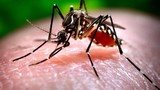 Second sample tests positive for West Nile Virus in Clark County