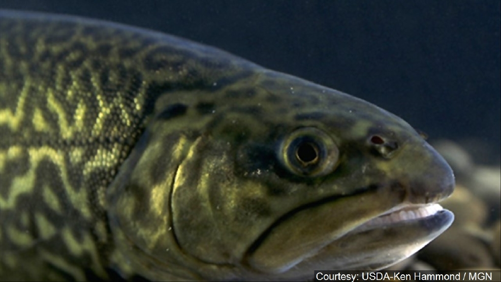 Heat and below normal rainfall is affecting the state 39 s for Maine state fish