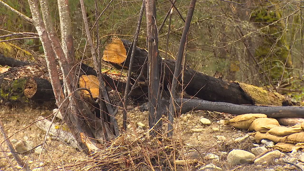 All that was left of the treehouse along the Carbon River on Tuesday were some charred logs, (Photo: KOMO News)