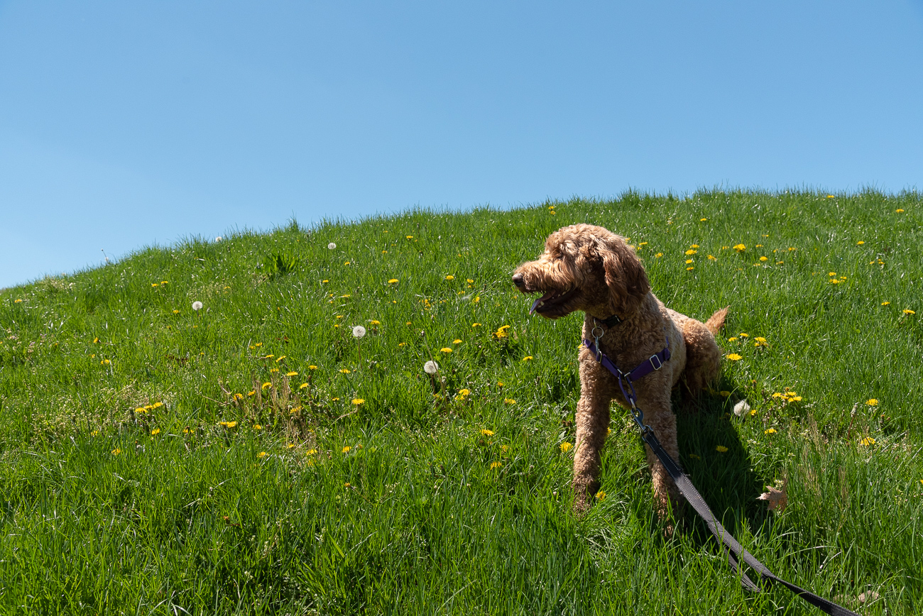 Dogs are more than welcome to walk Avon Woods' trails so long as they're on a leash. There's plenty to sniff along the path. / Image: Phil Armstrong, Cincinnati Refined // Published: 4.25.19