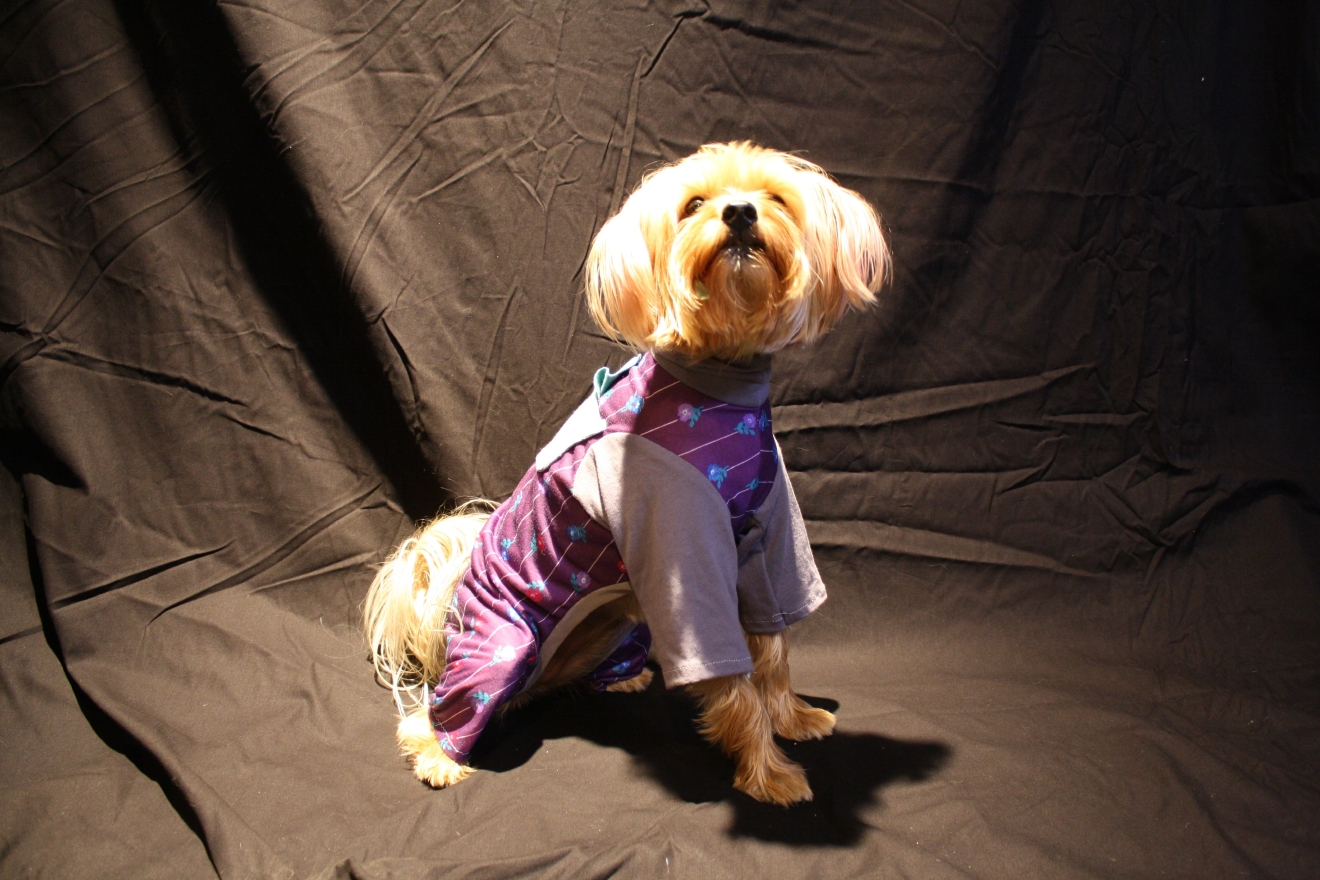 People use clothes to show off their personality, why not let your dog do the same?  Seattle fashion designer Malia Peoples is hosting a workshop to teach you how to sew an outfit for your fur baby. (Image: Malia Peoples)