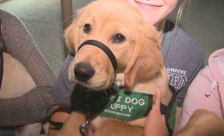 This puppy is being trained to become guide dogs for the blind.<p></p>