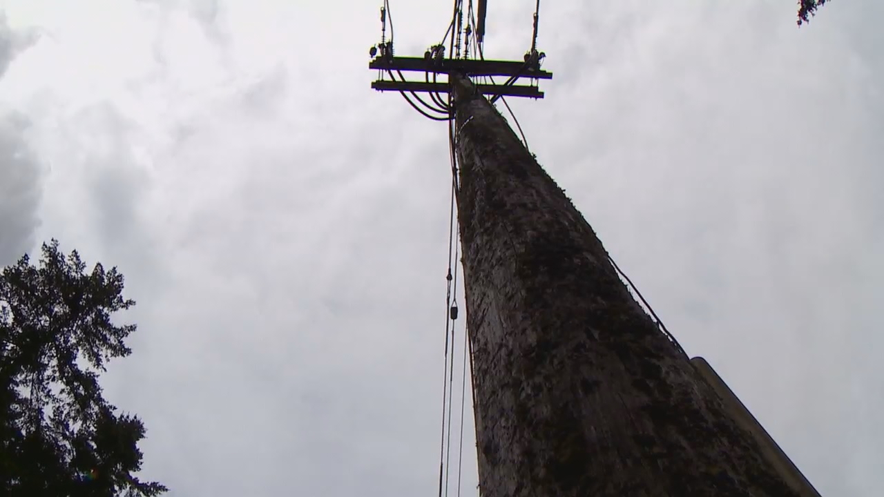 Fishing line was discovered tied around a utility pole. (Photo: KOMO News)<p></p>