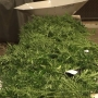Hardin Co. woman accused of sophisticated marijuana-grow operation out on bond