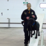 New dogs assigned to disaster search teams