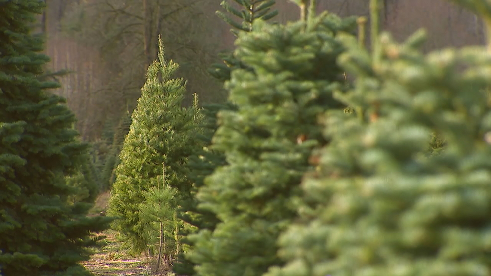 How Much Do Real Christmas Trees Cost.Christmas Trees May Cost More Green Linkedin