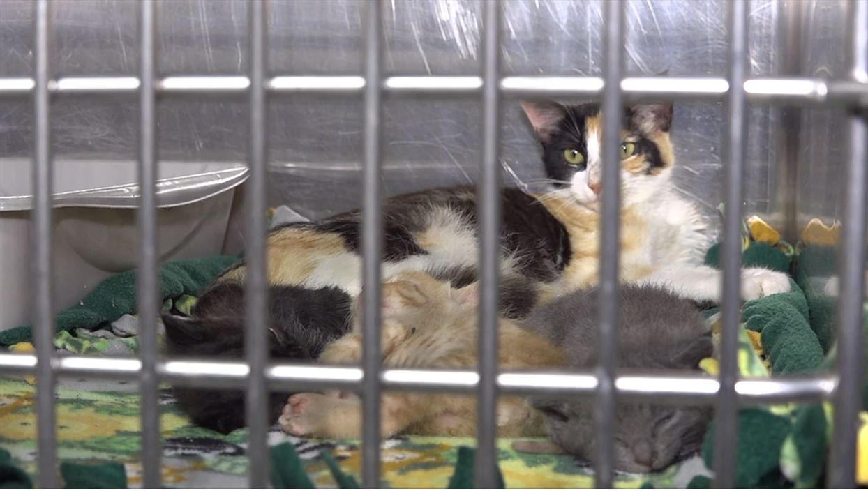 Beaumont Animal Shelter asking for help to save a pet through adoption