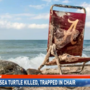 Endangered sea turtle found dead with Alabama beach chair wrapped around neck