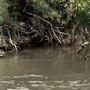 Algae-related toxin detected in Jordan River