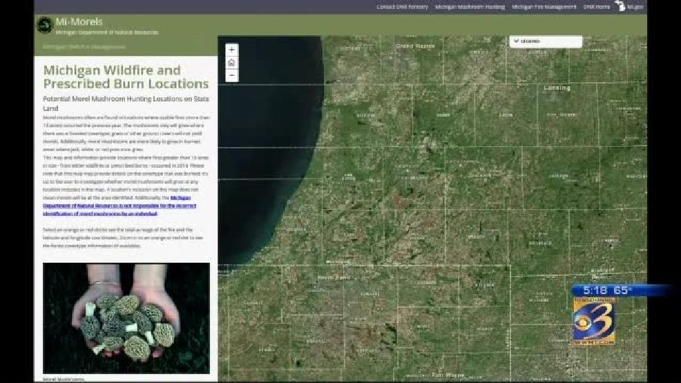 Morel Mushroom Michigan Map.Dnr Releases New Tool For Morel Mushroom Hunters Wwmt
