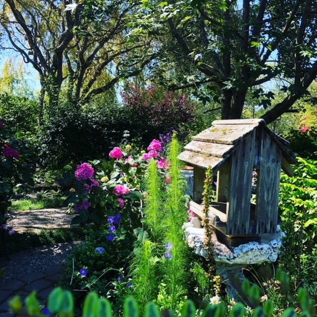 On Saturday, June 22, you are cordially invited to five private gardens in Bainbridge Island, through the Garden Conservancy Open Days program, 10 a.m. to 4 p.m. The Open Day is rain or shine, and no reservations are required. Admission is $10 per garden; children 12 and under are free. 10202 Rodal Court NE.  A Victorian, shabby chic, perennial garden full of flowers, vignettes, pathways, a rose garden, birdbaths, arbors, and a charming porch for entertaining. Many containers are filled with sweet peas, annuals, fuchsias, and hydrangeas. Many beautiful trees are home to birds galore and busy squirrels! There is an amazing collection of garden accoutrements and established bamboo. This garden has a lot of shade for hot afternoons and just the right amount of sun for flowers to bloom vigorously and keep the sweet peas performing from April to September.{ }(Image courtesy of Stephanie Werskey).