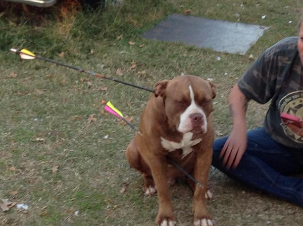 Erin Dodson came home from work Monday and found her dog, Spaz, suffering in the backyard after being shot by arrows.