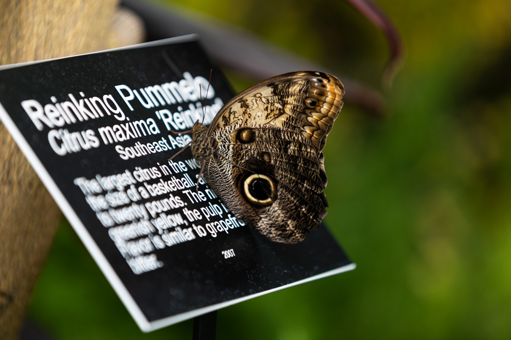 Even the butterflies want to learn more! / Image: Amy Elisabeth Spasoff // Published: 3.31.19