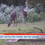Lancaster Co. hunters face new regulations after deer tests positive for CWD