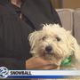Snowball needs a forever home!
