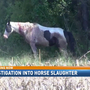 Horses found shot and killed