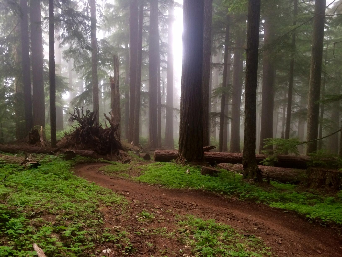 Hiking trail near Oakridge (Jenna Berman/CC by 2.0)