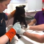 Hunters investigated after taking wild bear cubs home